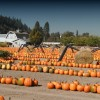 Top 3 Pumpkin Patches in Pierce County